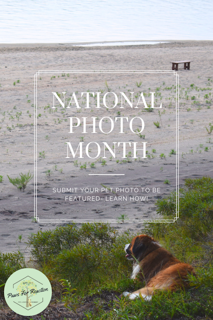 May is National Photograph Month: Do you want your pet featured?