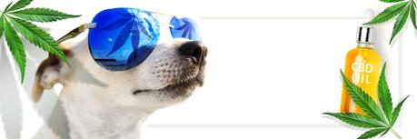 7 Reasons why CBD oil for dogs can improve your pets health