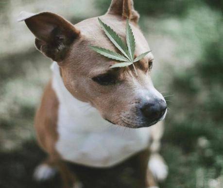 How to Find Quality CBD Pet Product