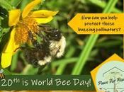 World Day: Protect Bees