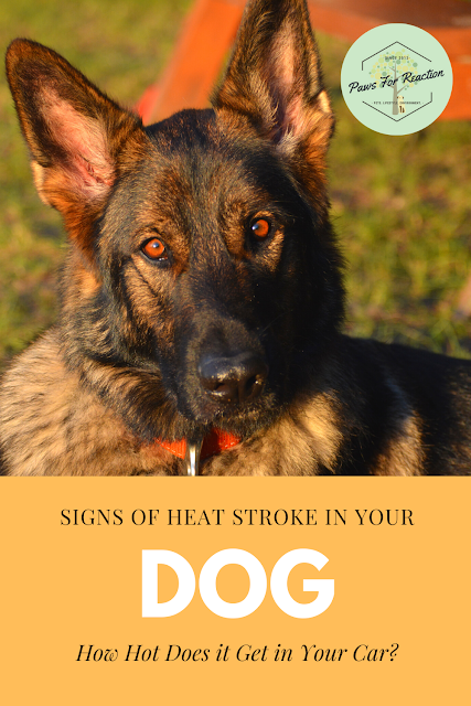 Heatstroke in dogs: Sunstroke, hot cars and other heat hazards for your dog