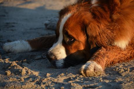 Does my dog have heatstroke? How to prevent my dog from getting heatstroke