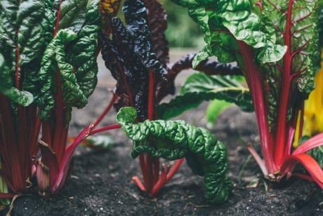 growing-plant-home-urban-gardening