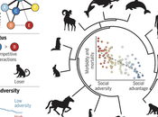 Social Animals Need Connection Health Survival