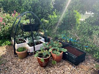 The Veg Diaries - ok boys, its time to move outside