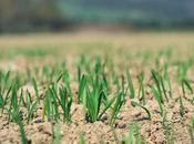 Sand Grass?