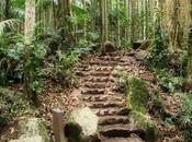 Should Visit Tamborine Rainforest Skywalk?