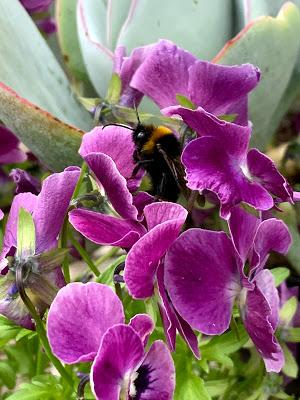 Its all about the bees