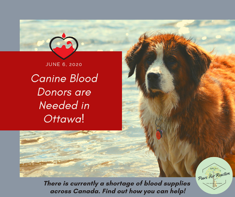 Canine donors needed: Ottawa Animal Emergency & Specialty Hospital is hosting a Canadian Animal Blood Bank Clinic
