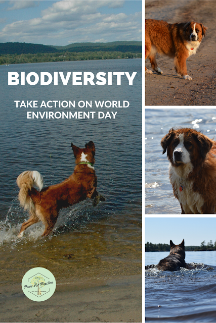 June 5 is World Environment Day 2020: Learn how you can help preserve biodiversity