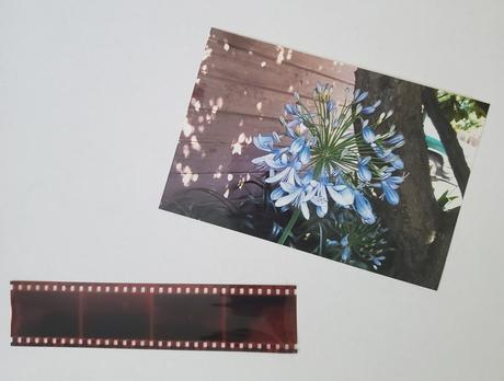 Preserving your Family Treasures: Photographs