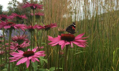 A quick english garden tour in june