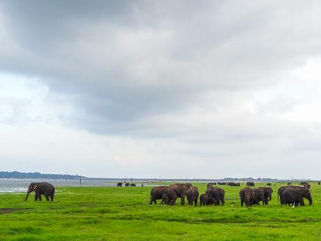 15 Photos to Enjoy a Virtual Trip to Sri Lanka