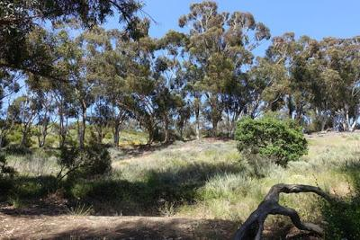 A WALK IN THE SANTA MONICA MOUNTAINS at Will Rogers State Historic Park, Los Angeles, CA