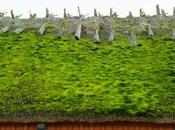 Green Roof: Does Work, Types, Benefits Examples