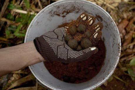 making-seed-ball