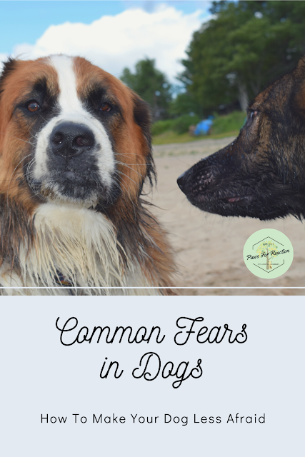 Common fears in dogs and how to make your dog less scared