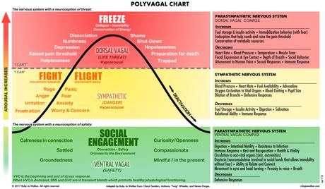 Mental Health & The Polyvagal Theory