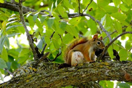 Squirrel in the trees