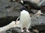 Penguins Perverts? Pamphlet Reveals 'sexual Depravity' Birds