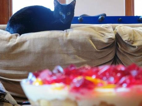 cat in background and finished trifle