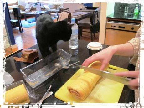 Sponge being cut into half inch slices with black cat on bench