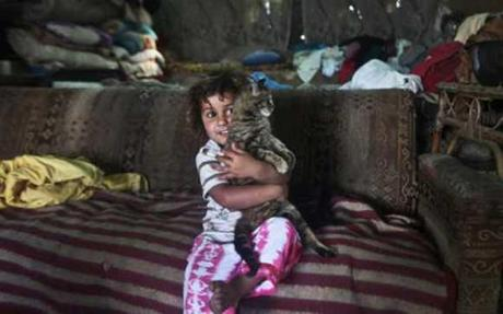 Israeli & Palestinian Scientists Finger Cats As Culprits In Gaza Superbug Spread