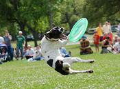 Extreme Distance Frisbee European Championships Dogs