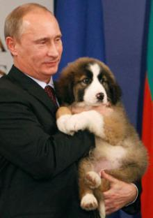 A Puppy For Putin: Japanese Akita Pup Given To Russian President
