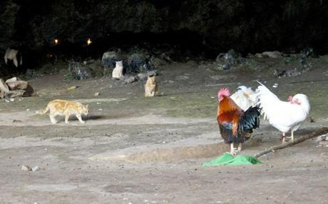 fertility cave  caves africa cats chickens