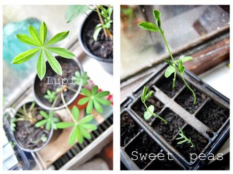 It's all about home grown