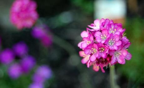 Photo 28-05-2012 19 45 14