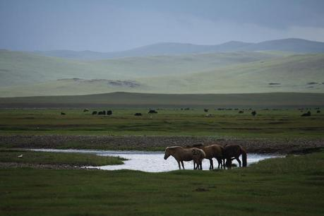 The Mongol Derby: A 1000km Horse Race Across The Mongolian Steppe
