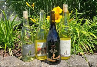 Winephabet Street Season 2 Episode 9 I is for Indigenous Yeast with Special Guest Guy Pacurar from Fathers + Daughters Cellars