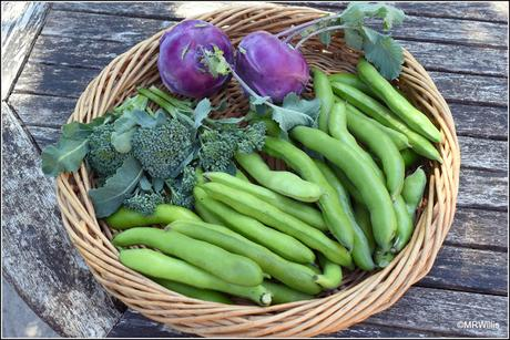 I got some Broad Beans after all!