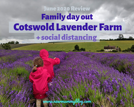 Visiting Cotswold Lavender and social distancing – June 2020 Review