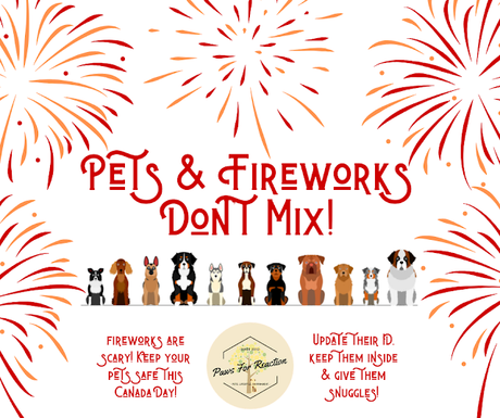 Firework Safety: Fireworks are scary for your pet. Keep your pets safe this Canada Day