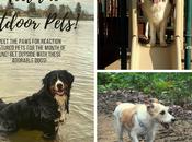 National Great Outdoors Month: Meet Featured Pets Enjoying Outdoors!