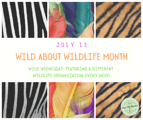 July is Wild About Wildlife Month: Introducing Wild Wednesday!