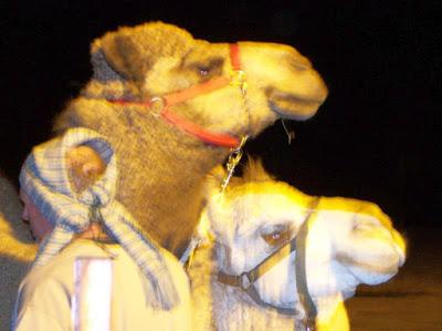 Of gnats and camels
