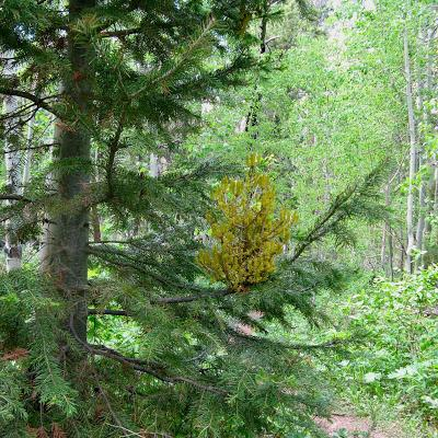 Rust in the Forest – complicated, but at times sweet