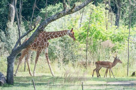 The savanna next door