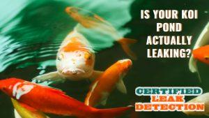 CLD - Koi Pond Leaking