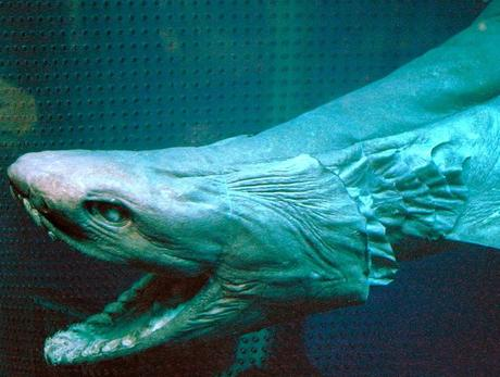 10 Stunning Exotic Aquatic Animals That Will Blow Your Mind