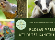 Wild Wednesday: Rideau Valley Wildlife Sanctuary Saves Lives Orphaned Animals #WildWednesday
