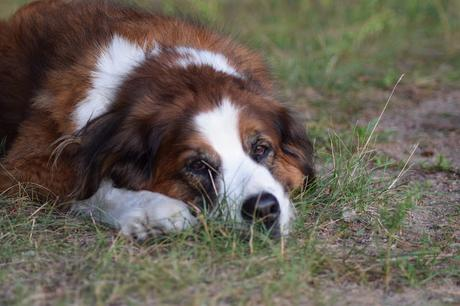 Pet Hydration Awareness Month: Is my pet dehydrated?