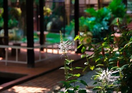 4 Things You Need to Know Before Hiring a Landscaping Designer