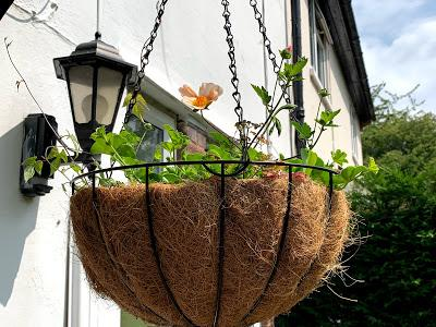 The Hanging Basket Journals - and then there were two