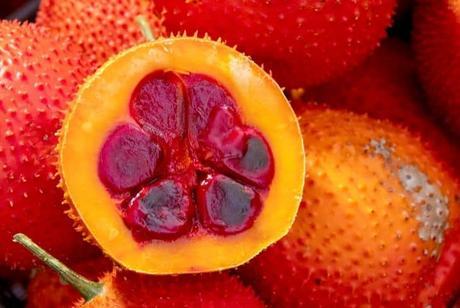 Gac Melons