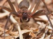 Venomous Retiring: Three Most Dangerous Poisonous Spiders Louisiana